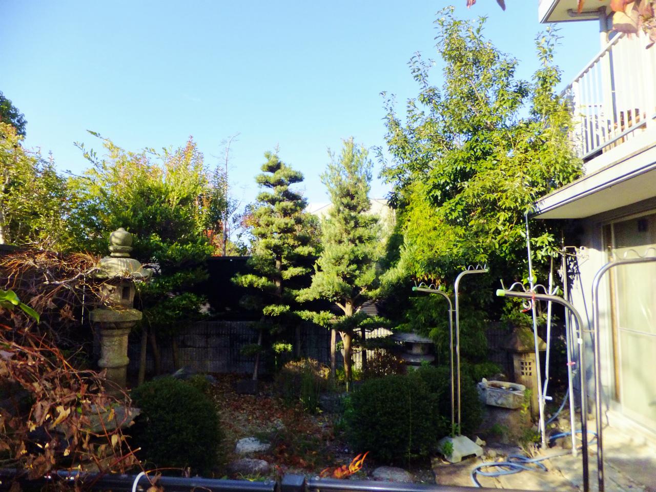 庭木・植木の選