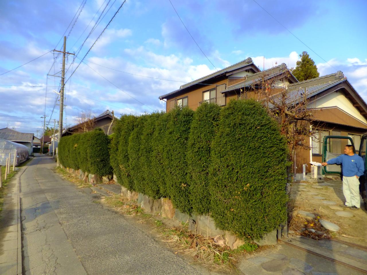 生垣刈込 名古屋・愛知の植木屋