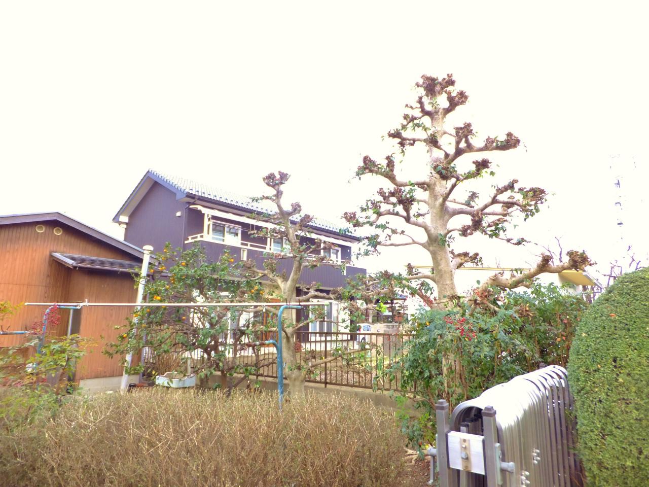 庭木の剪定 愛知・名古屋の植木屋