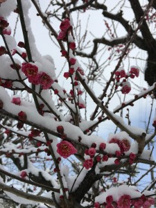 梅と雪アップ